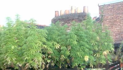 Maria en el tejado